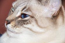 Tabby mit deutlich erkennbaren Wangenstreifen