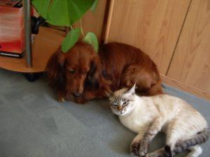 MTG-Katzengesellschaft-Thai mit Hund-Pappel