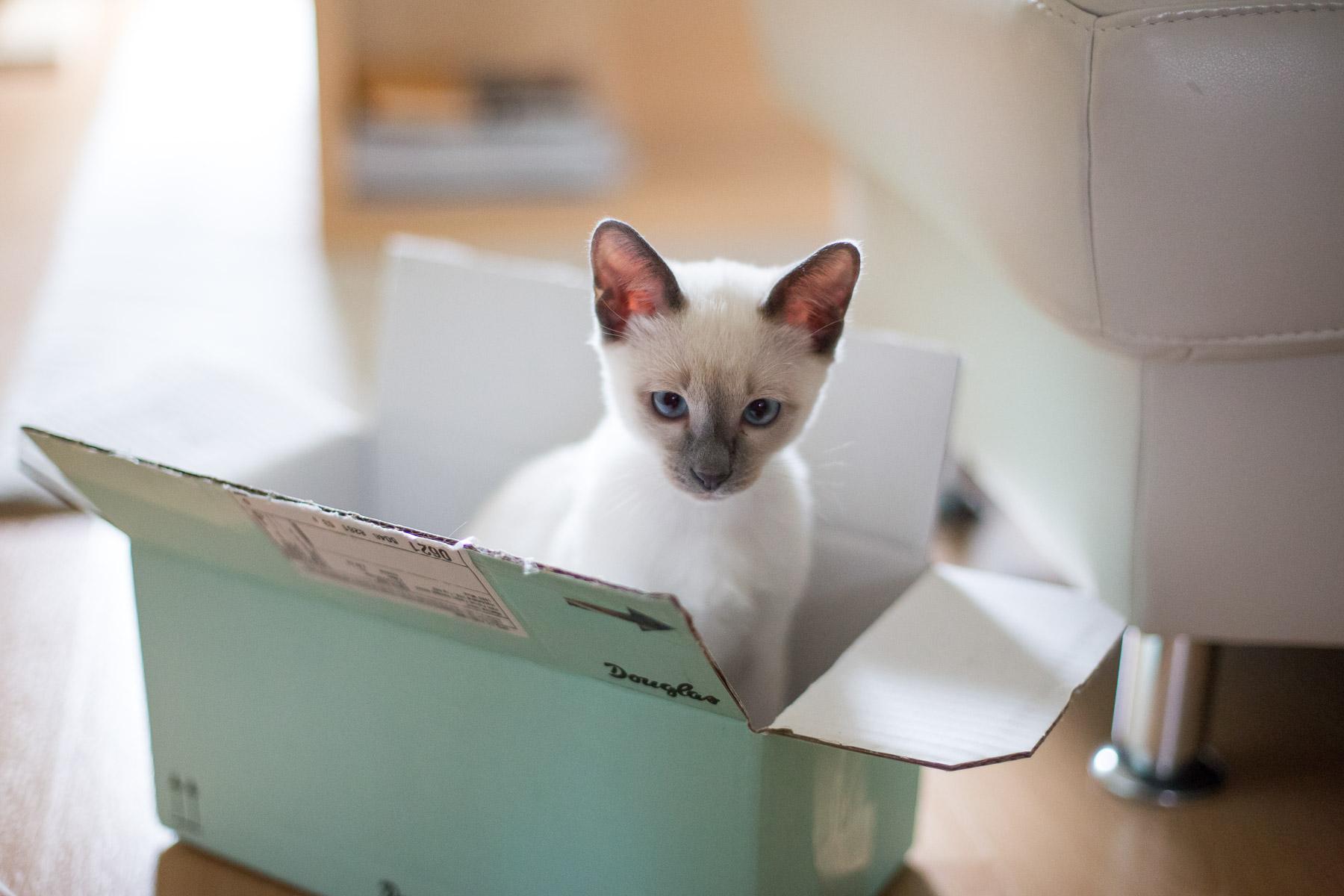 umzug mit katze umzug mit charlie unsere kleine katze. Black Bedroom Furniture Sets. Home Design Ideas
